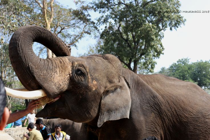 Dubare Elephant Camp 4