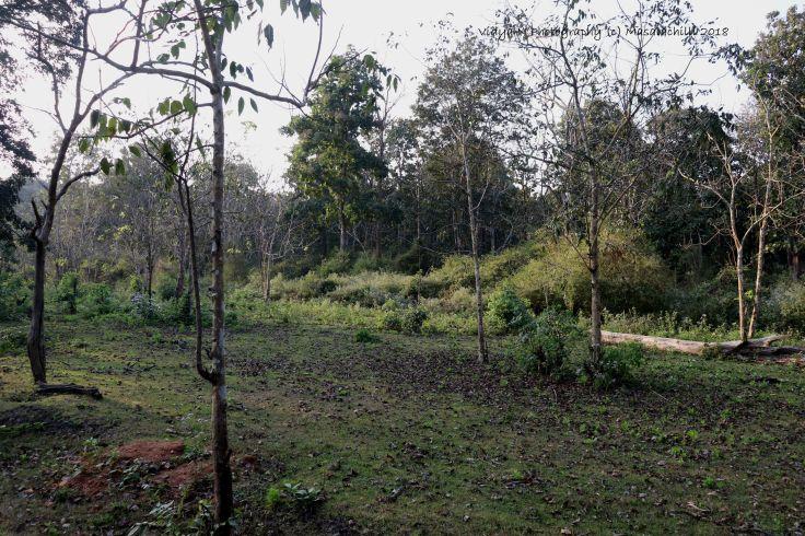 Nagarhole 1